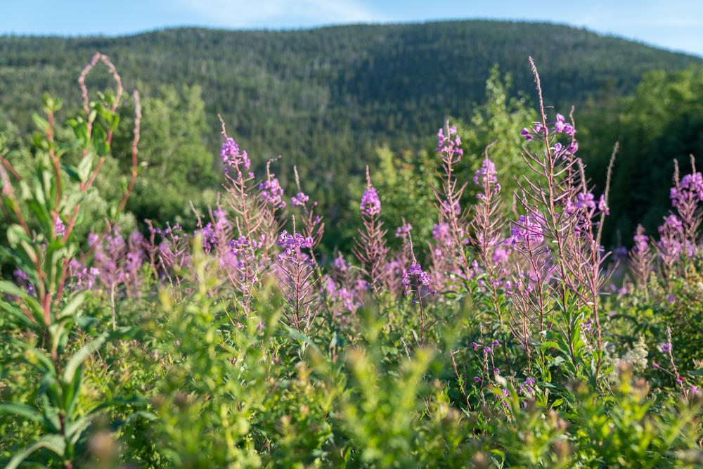FLOWERS MOUNTAIN.jpg