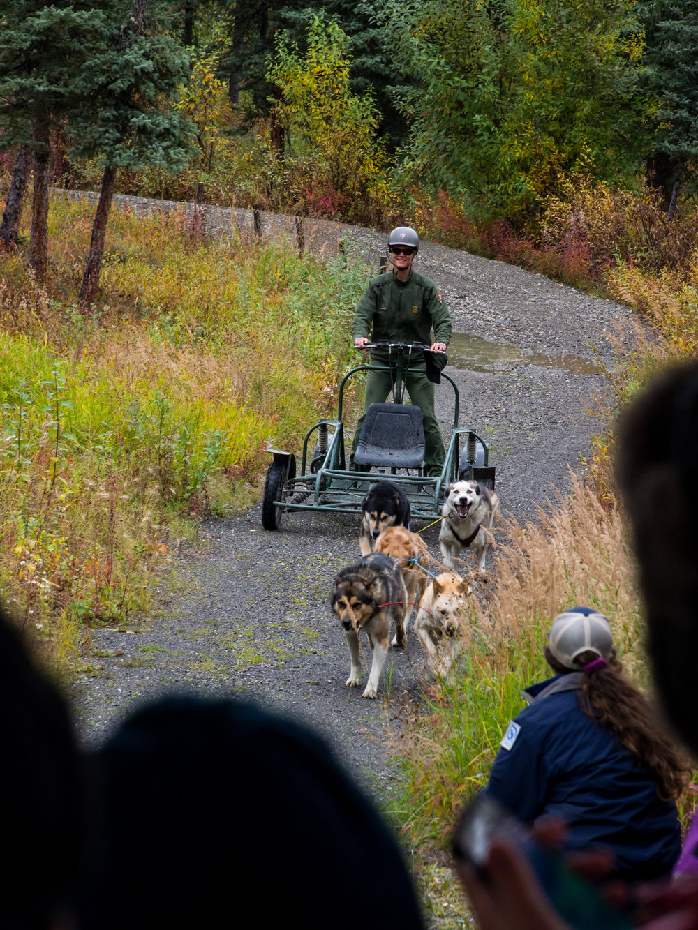 A park ranger demonstrates the pulling power of the sled dogs.