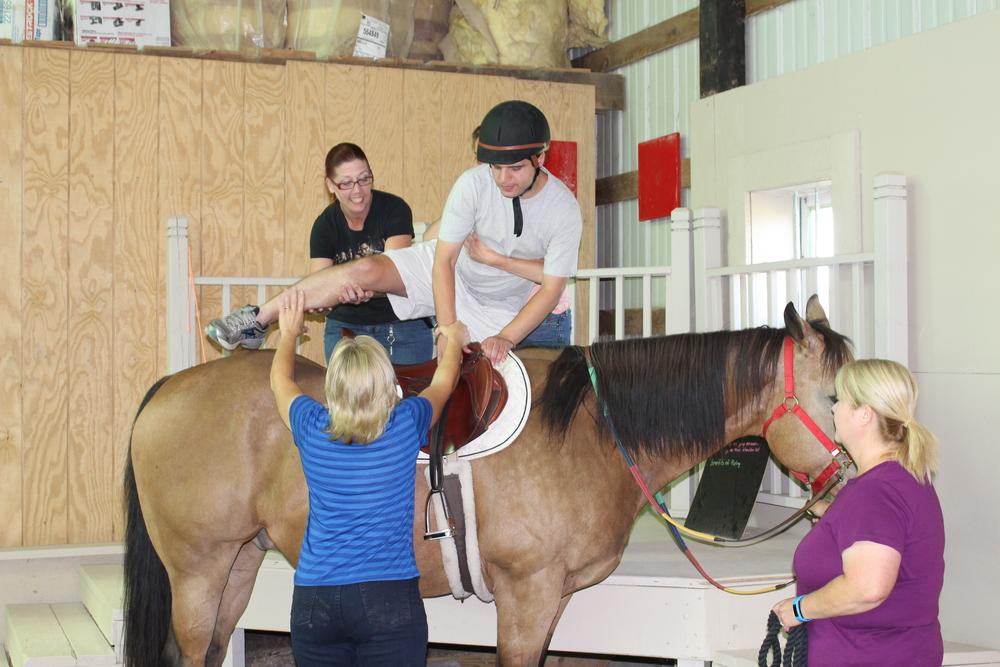 Horse Jeremy D.jpg