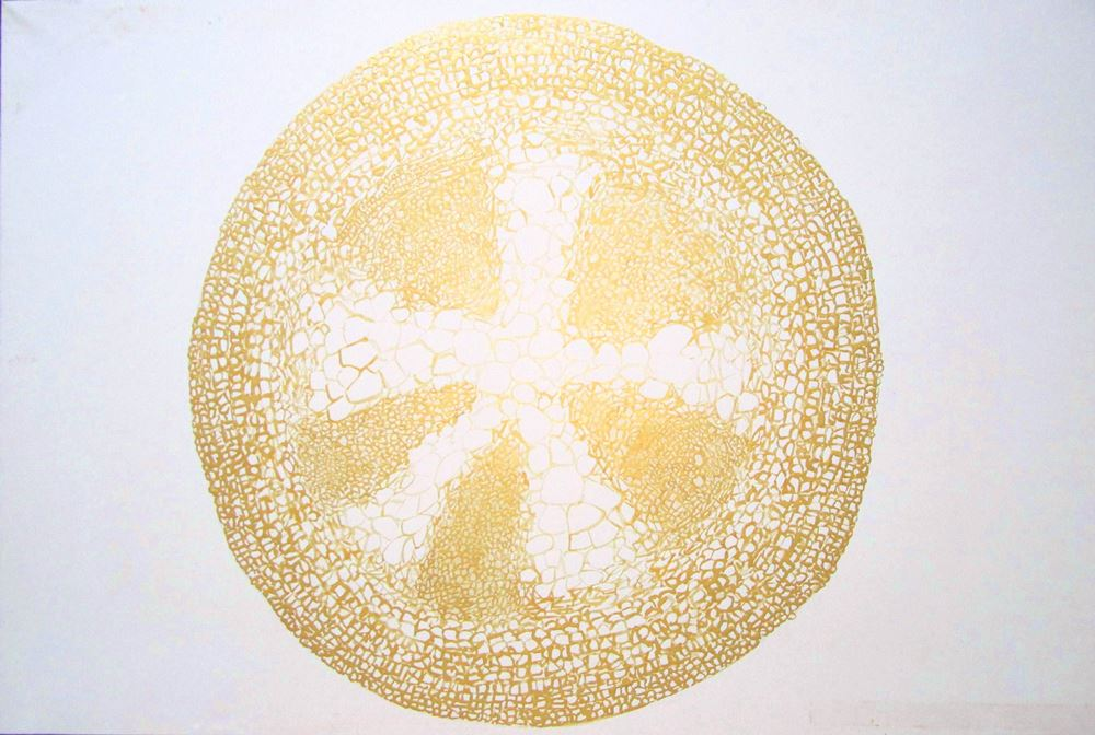 DICOT II , 2012, Powdered golden pigments and natural liquid adhesive on handmade paper, 24 x 36 inches