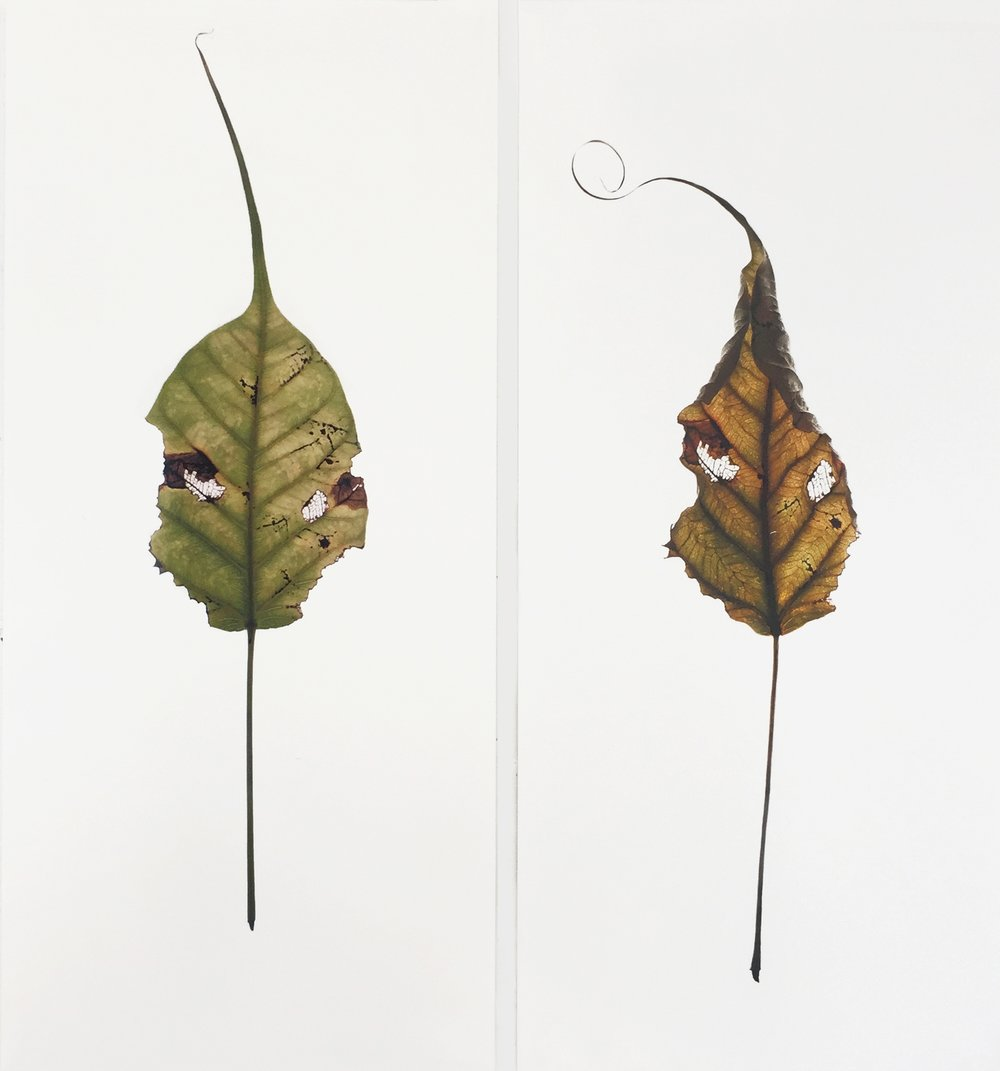 Bayan Leaves  (detail), 2015, Digital print on prepared paper, 11 x 7.75 inches each