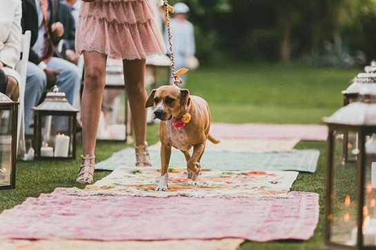 dog in the wedding party walking down aisle
