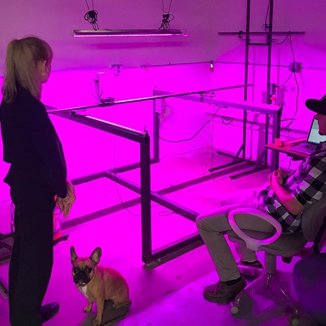 More light measurements! And we have an audience! #frenchbulldog #ledlights #horticulture #lightingdesign #engineeringlife #cnc #spectroradiometer