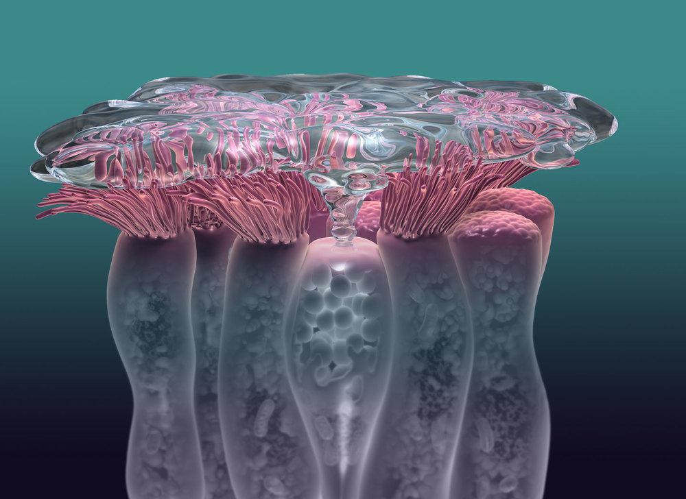 Goblet Cells
