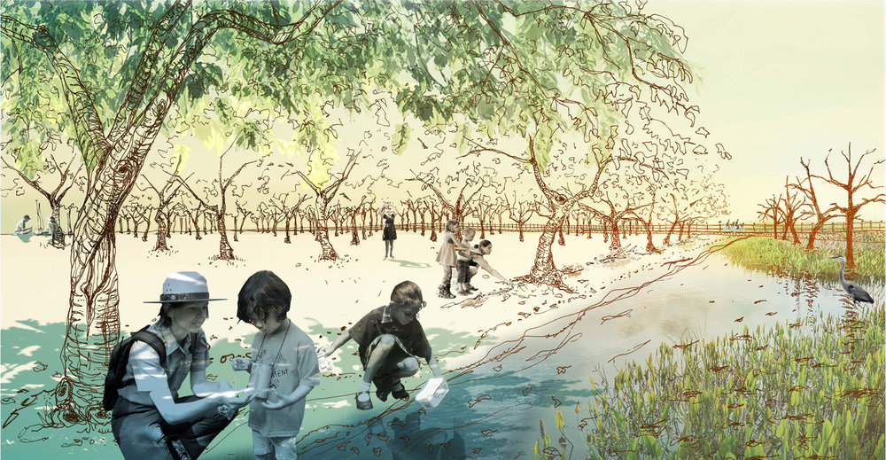 The advancing water's edge becomes a fecund place for exploration, observation, and learning. The memorial's contained perimeter creates a sheltered cove for discovery and research of an emergent wetland ecosystem.