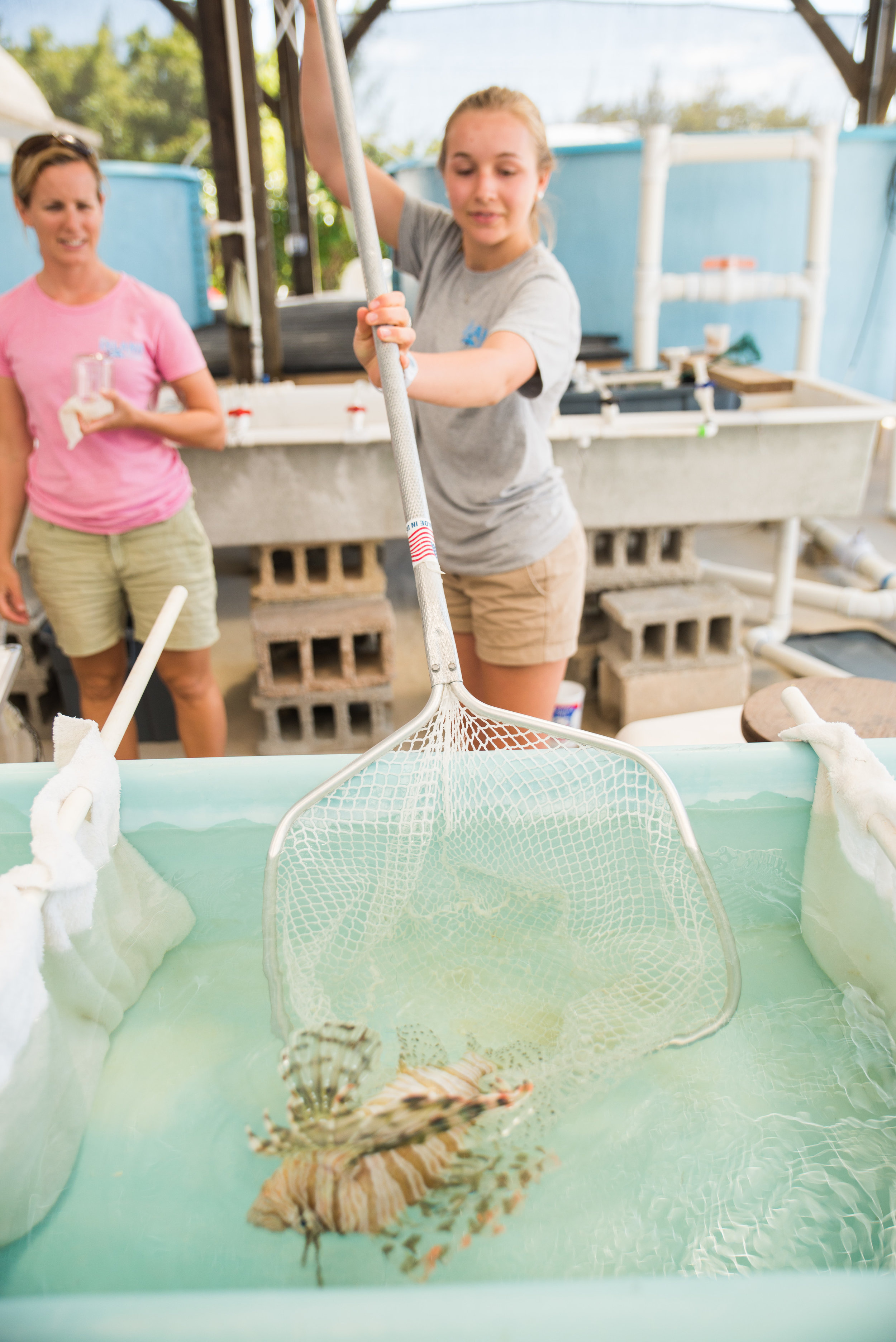lionfish (2)
