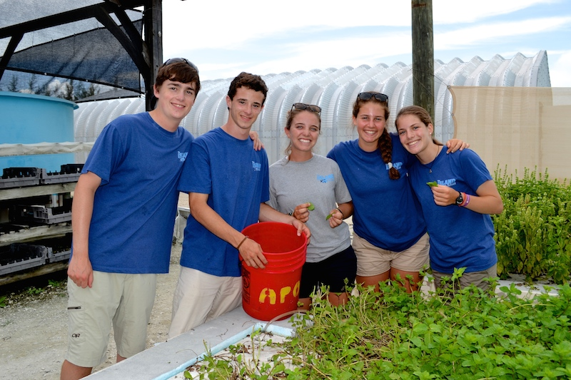 Sustainable Systems students learning about aquaponics