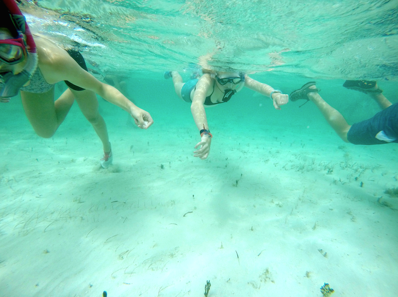 Students snorkeling in the clear water at the sandbar in the early afternoon.