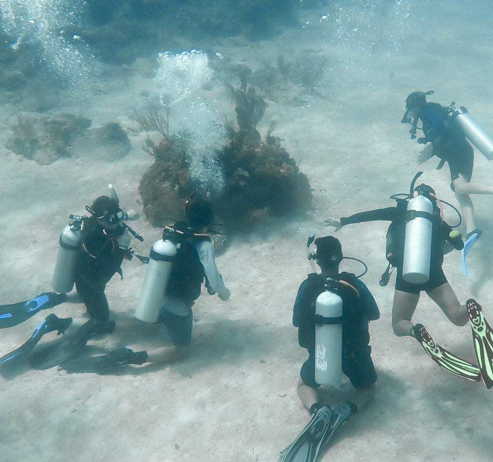On other days, students dive into their studies (literally) and make underwater observations of the nearby coral reefs. Through their connection with the  Cape Eleuthera Institute , students get to participate in important research and conservation efforts.