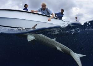 05CEI-Shark-Projects©Thomas-P.-Peschak-SOSF-300x212.jpg