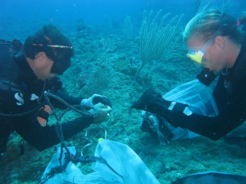 Akins and Curtis-Quick underwater lionfish surgery
