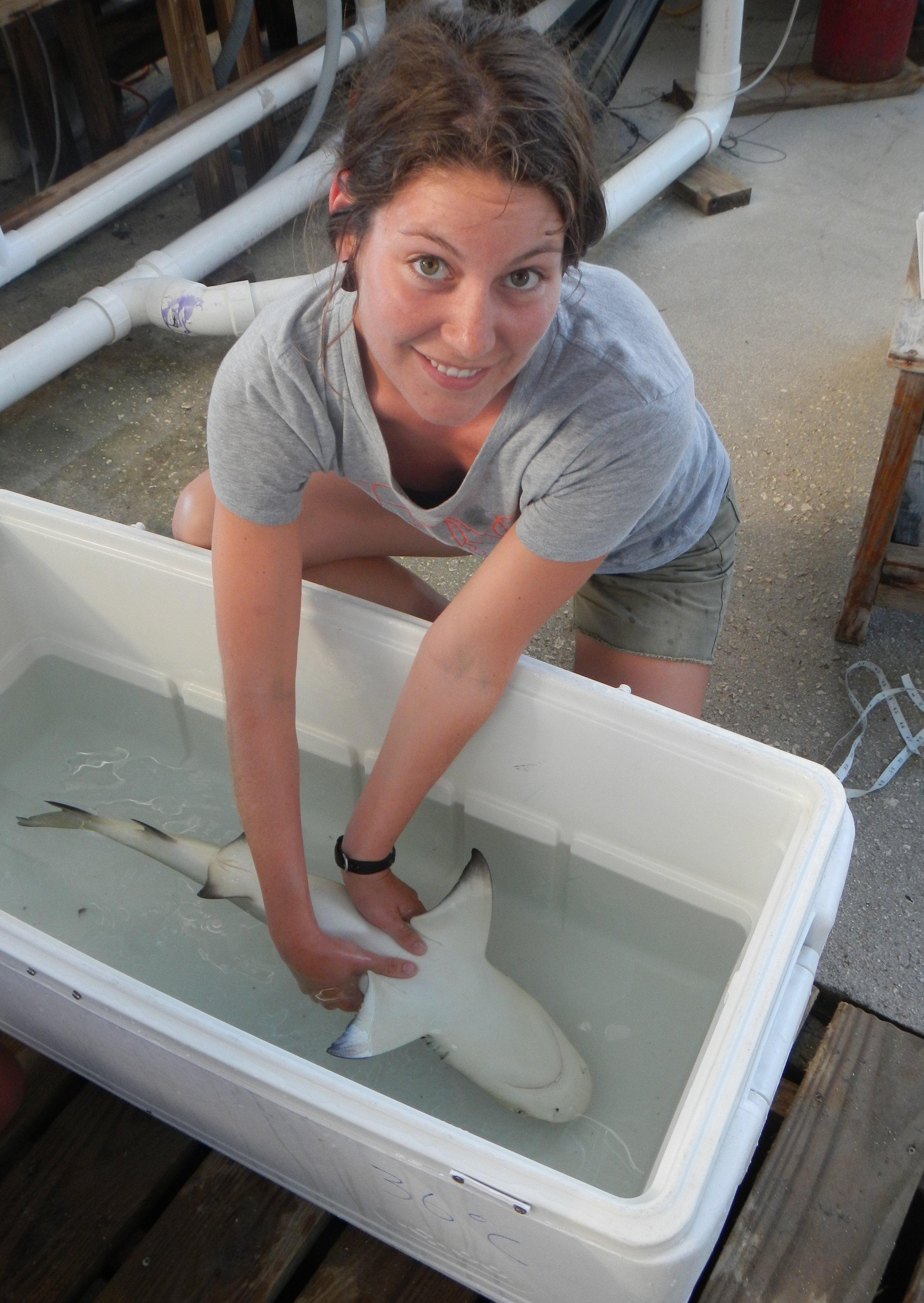 Former Flats intern Melissa handles a juvenile lemon shark