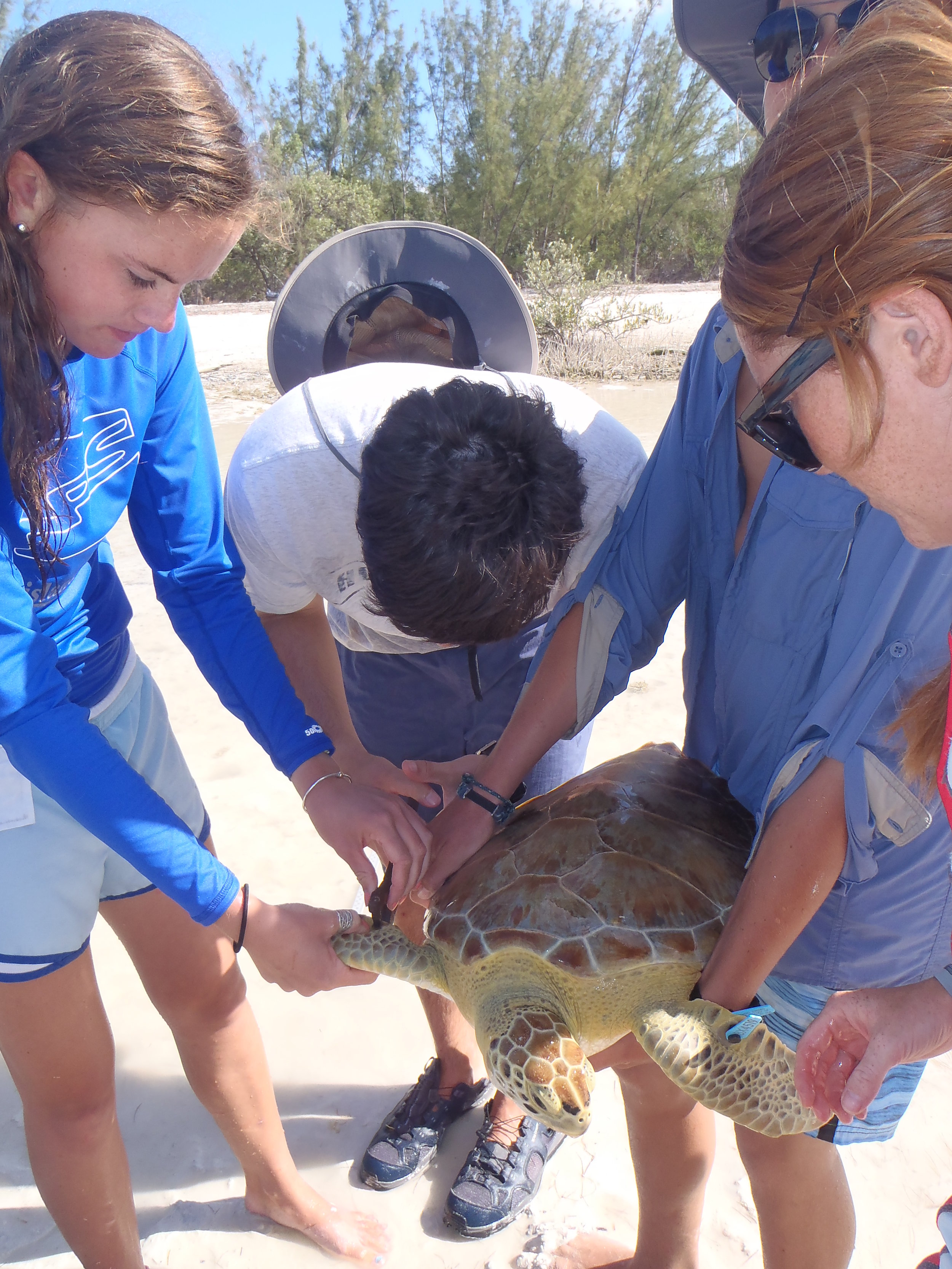 Students measuring turtle