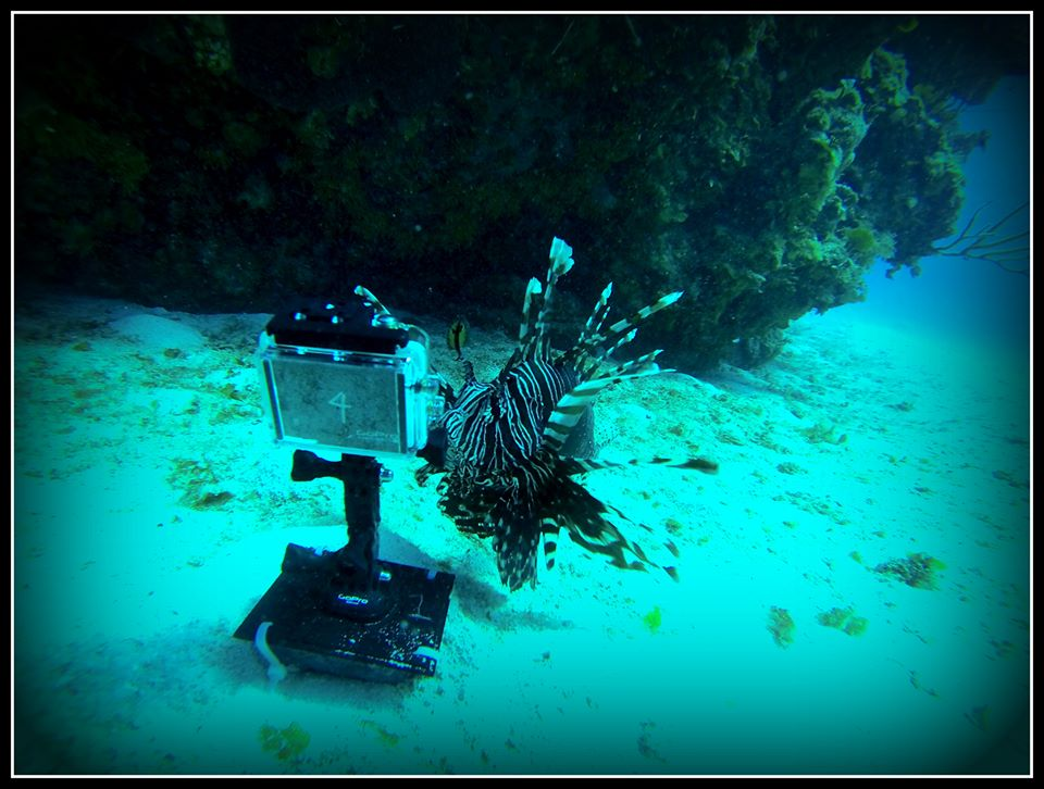 The lionfish are ready for their GoPro camera close-ups!