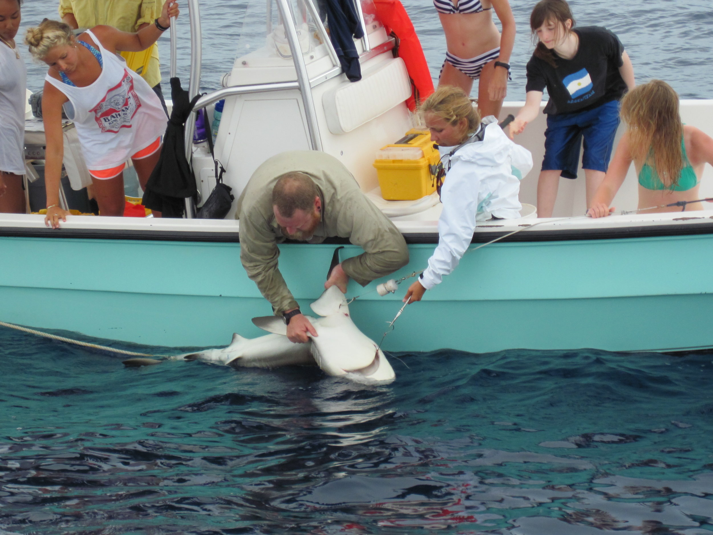 Shark team and Fathoms students helping work the Reef Shark on the line