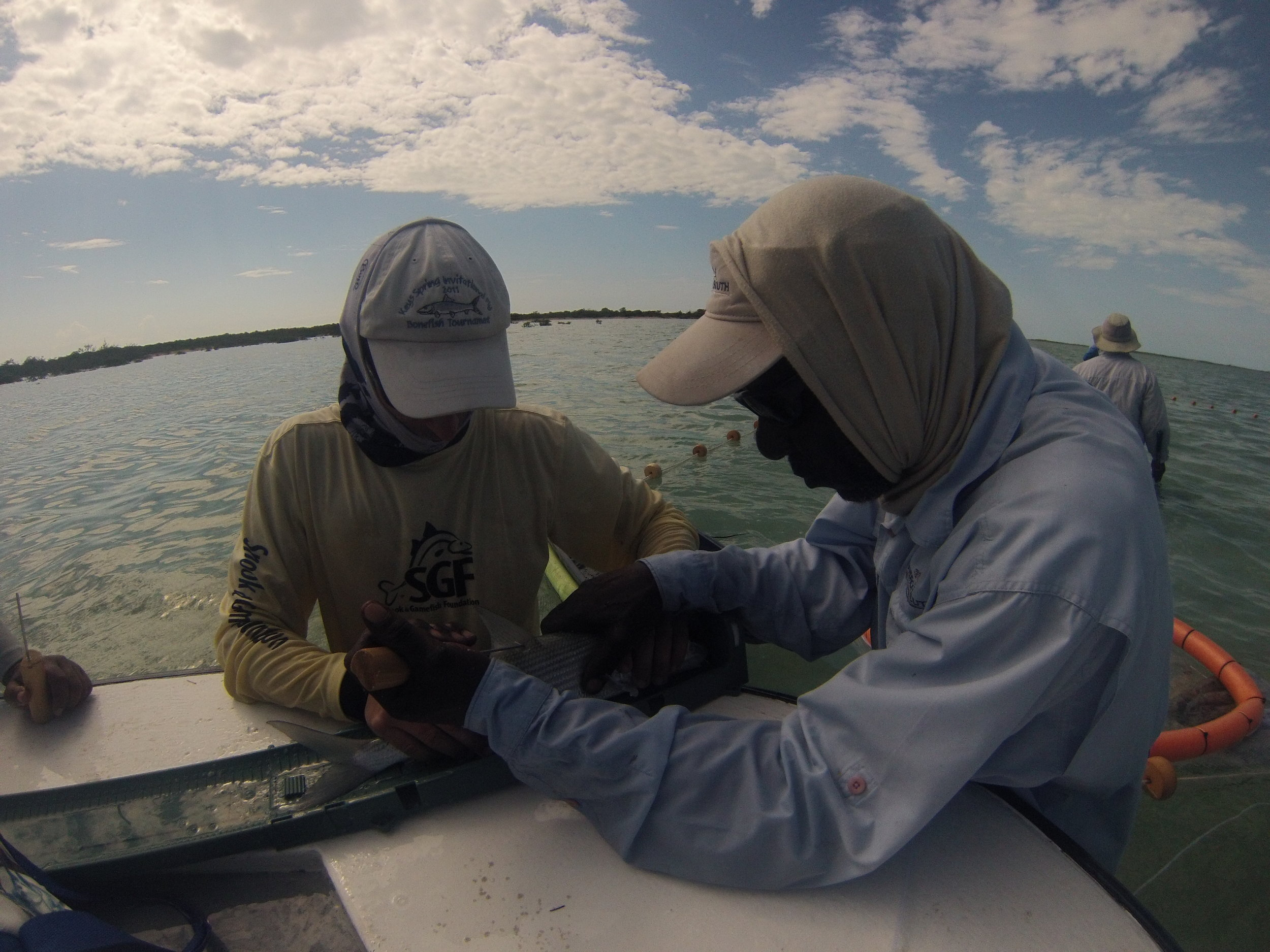Zack Jud (BTT) showing Deneki guide Sparkles how to tag a bonefish.