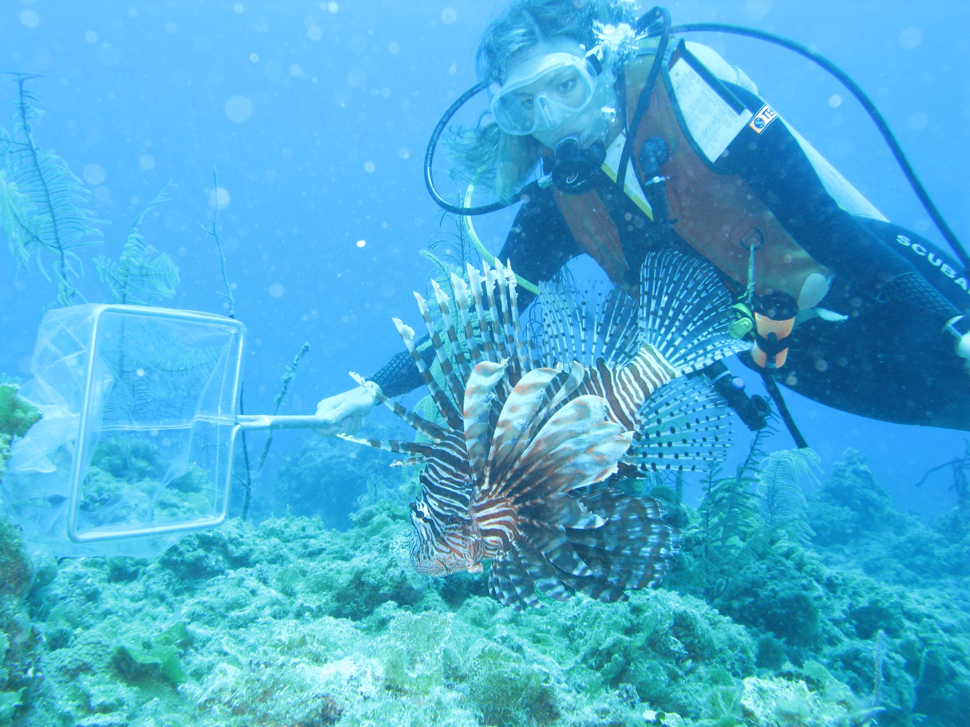 A photo of catching lionfish by REEF's Lad Akins