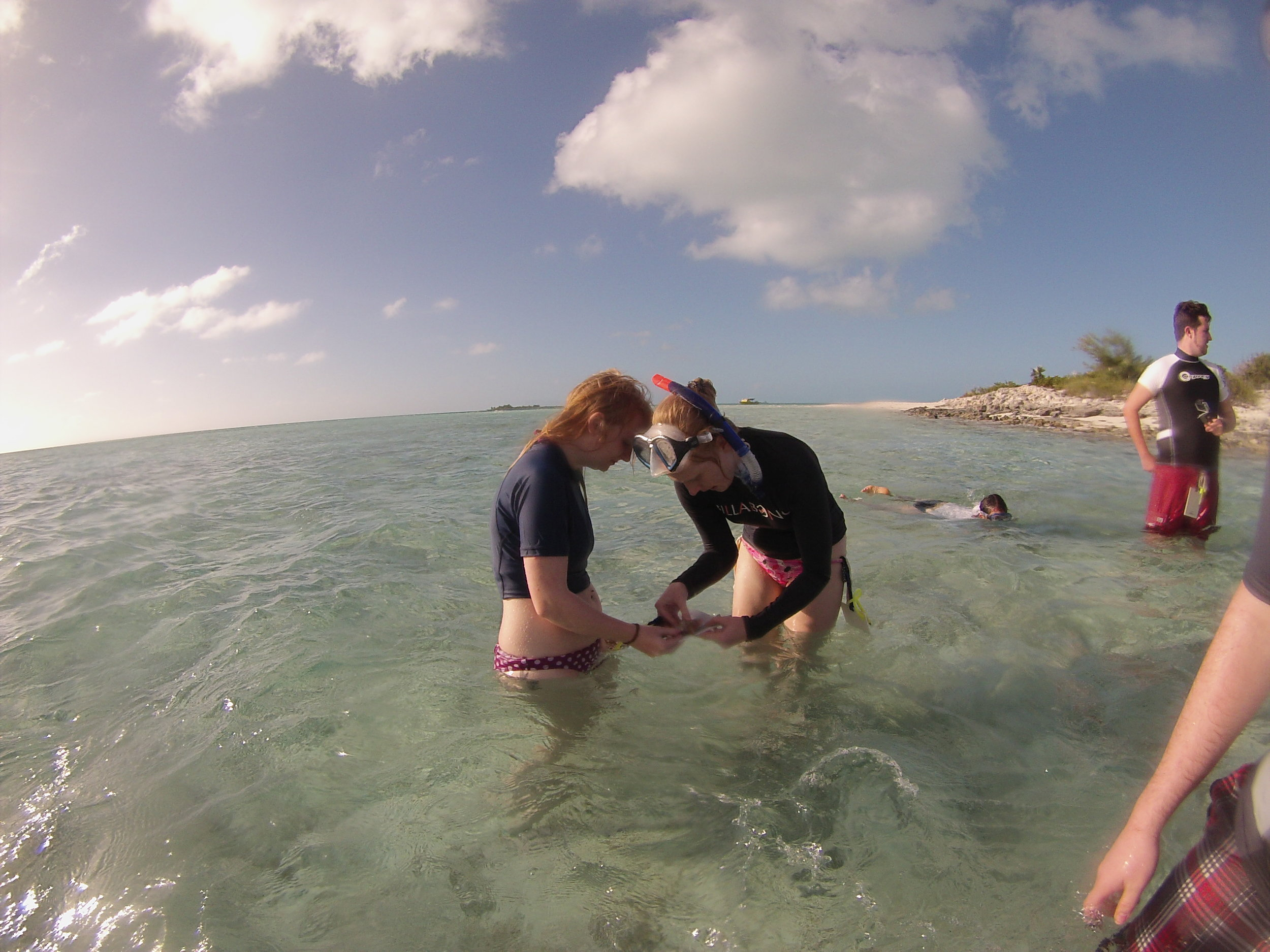 Measuring a juvenile conch