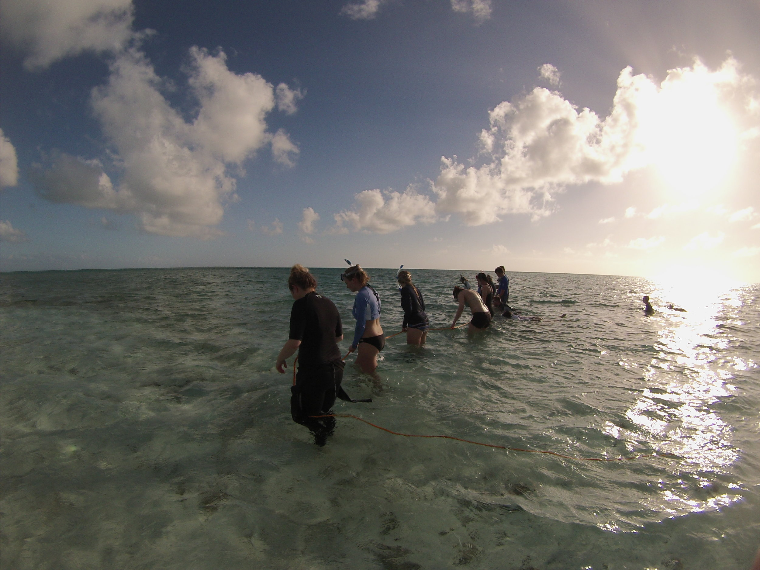 Students looking for juvenile conch