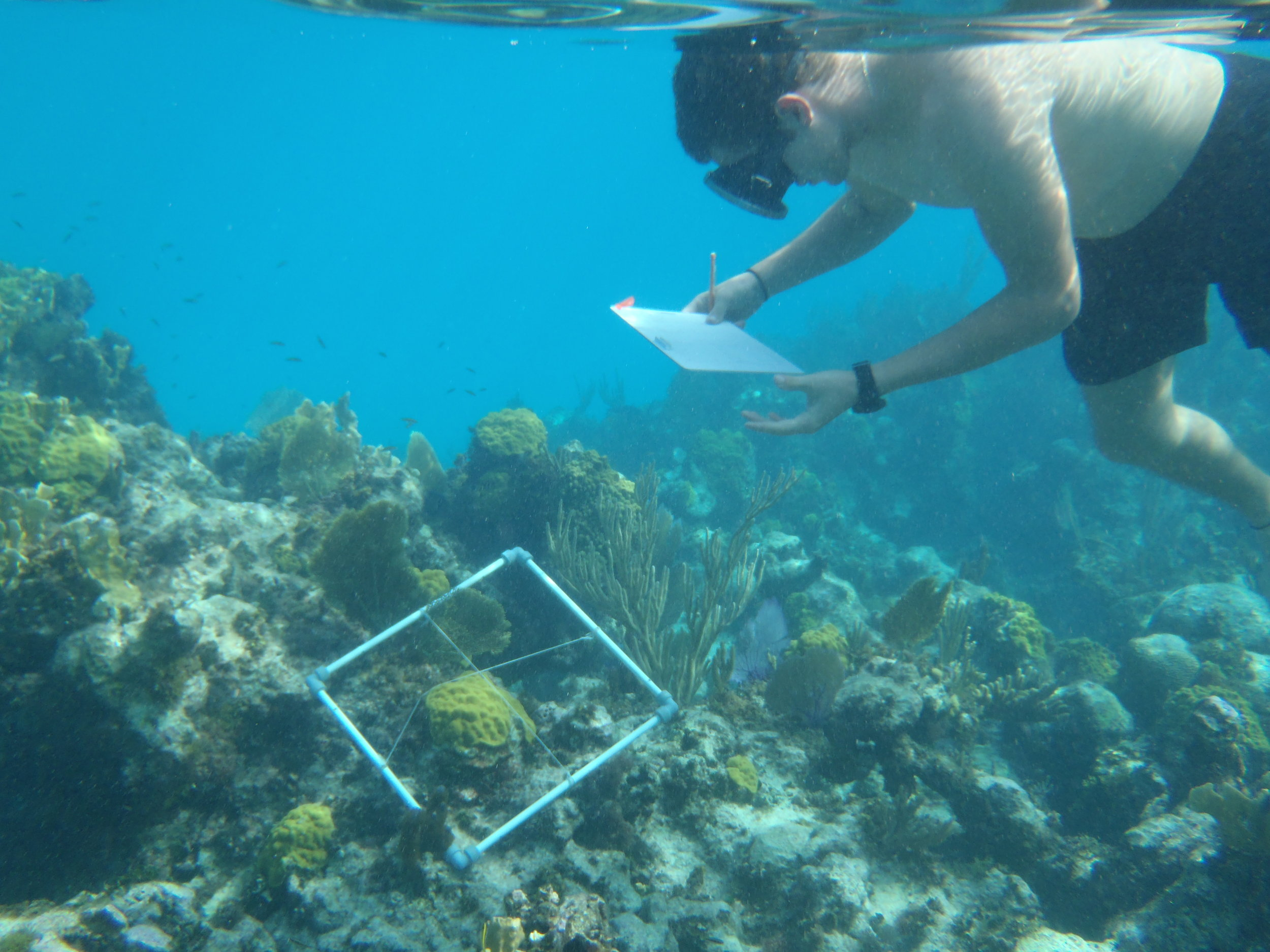 Student looking at coral cover