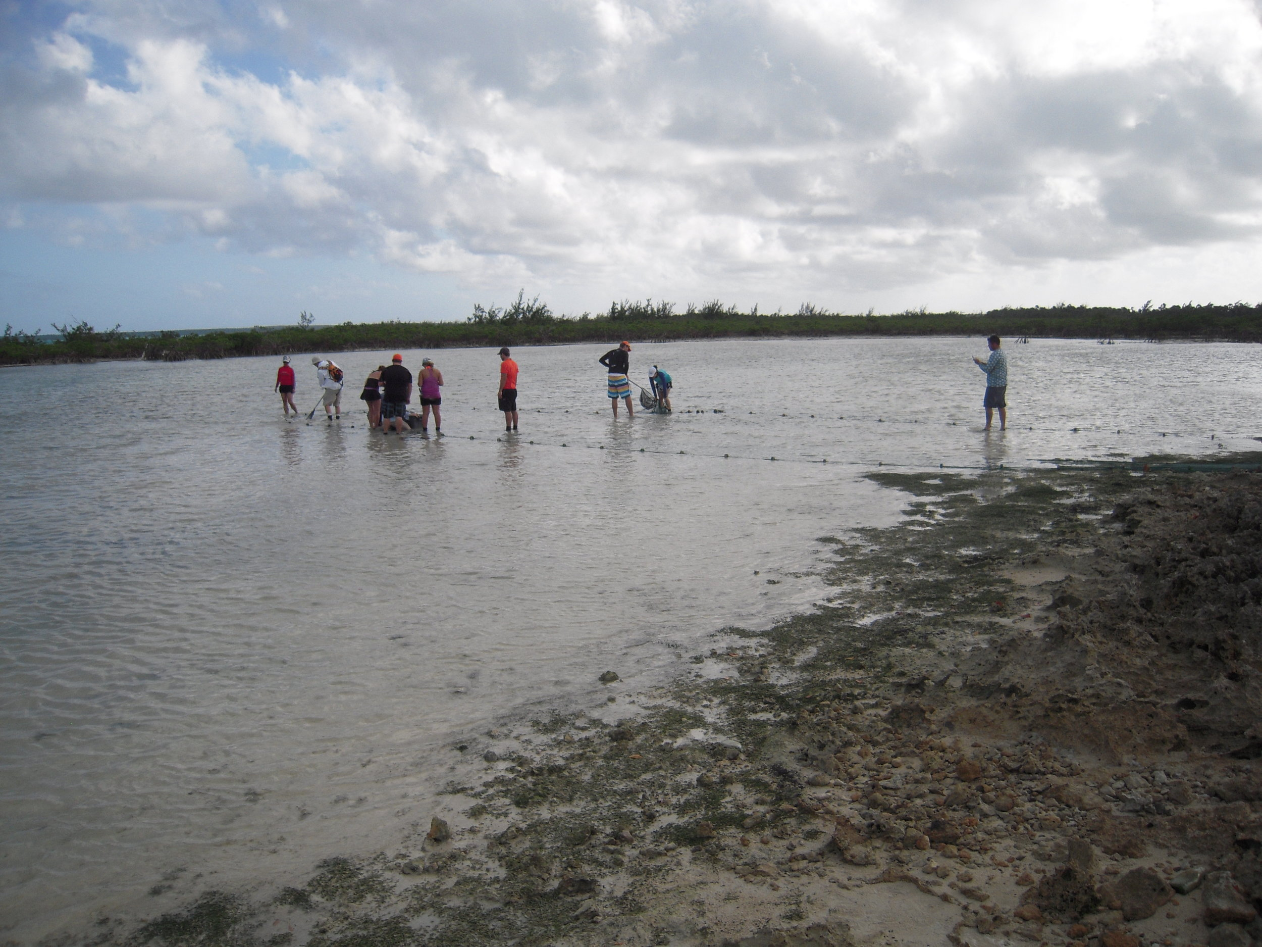 Students seining Rock Sound for bonefish and other flats fish with Zach