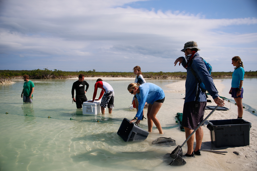 Seining for bonefish in Plum Creek