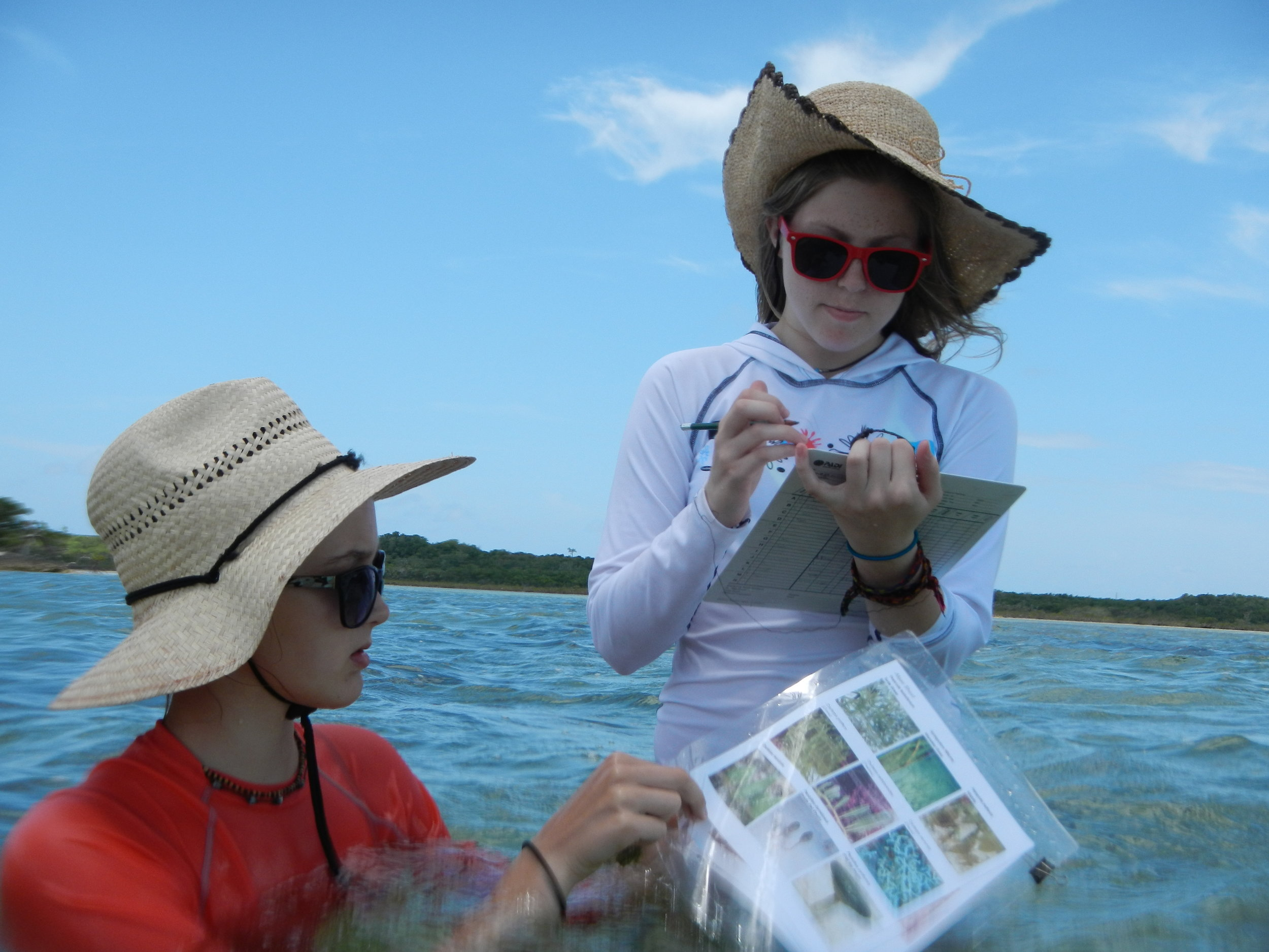 Two students IDing some seagrass out in the field