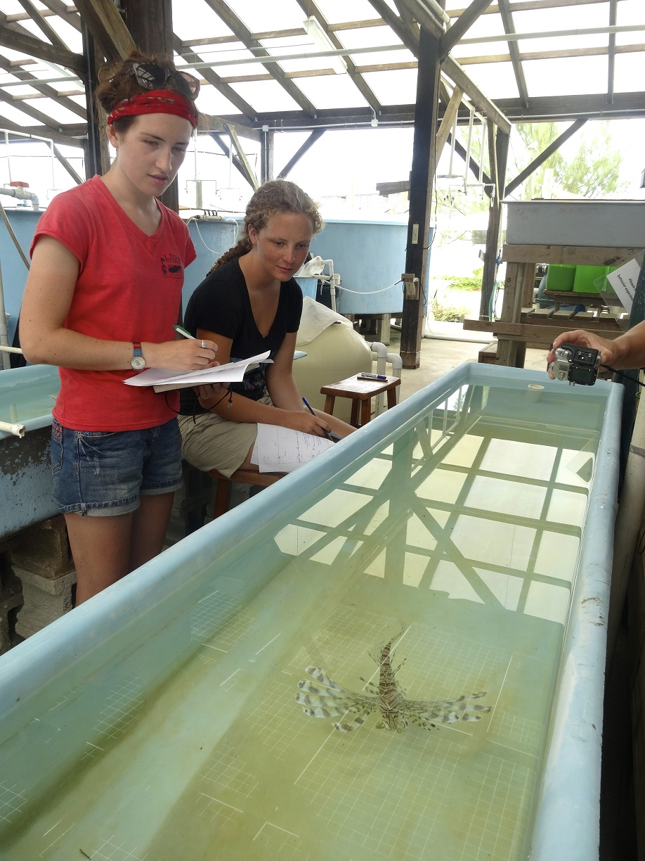 Students and interns observing lionfish in the lab