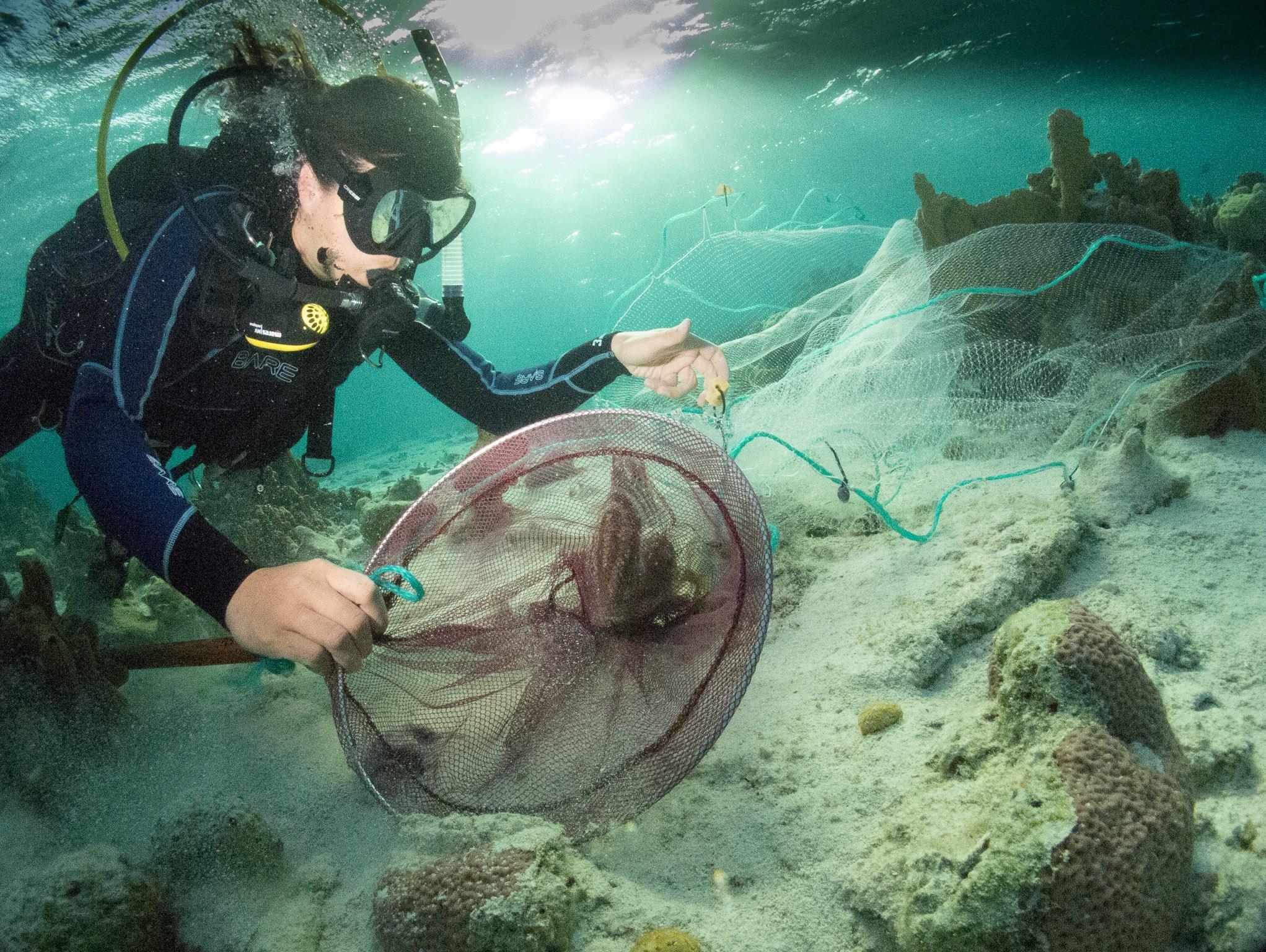 fish catching blog