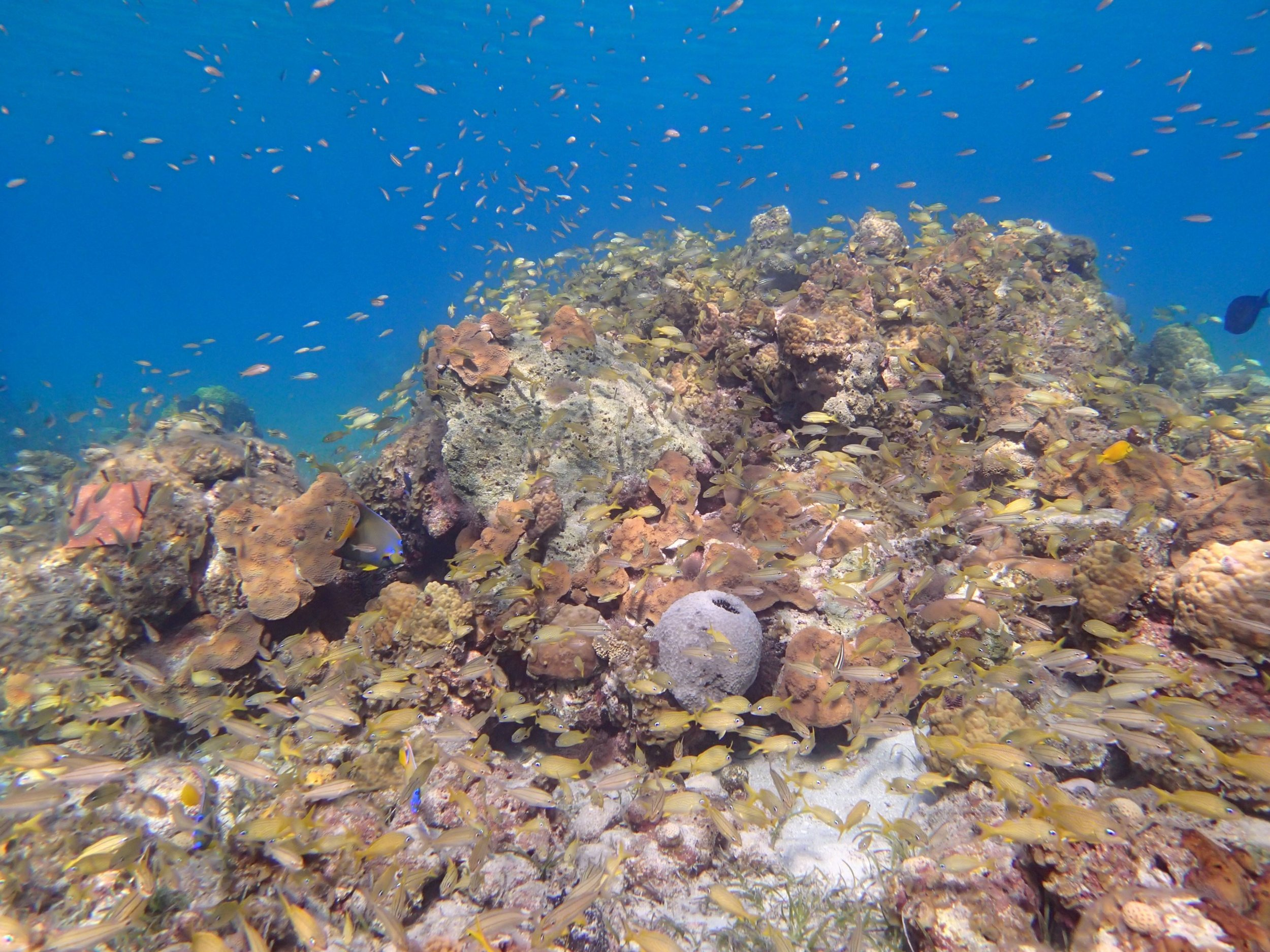 patch reefs south eleuthera