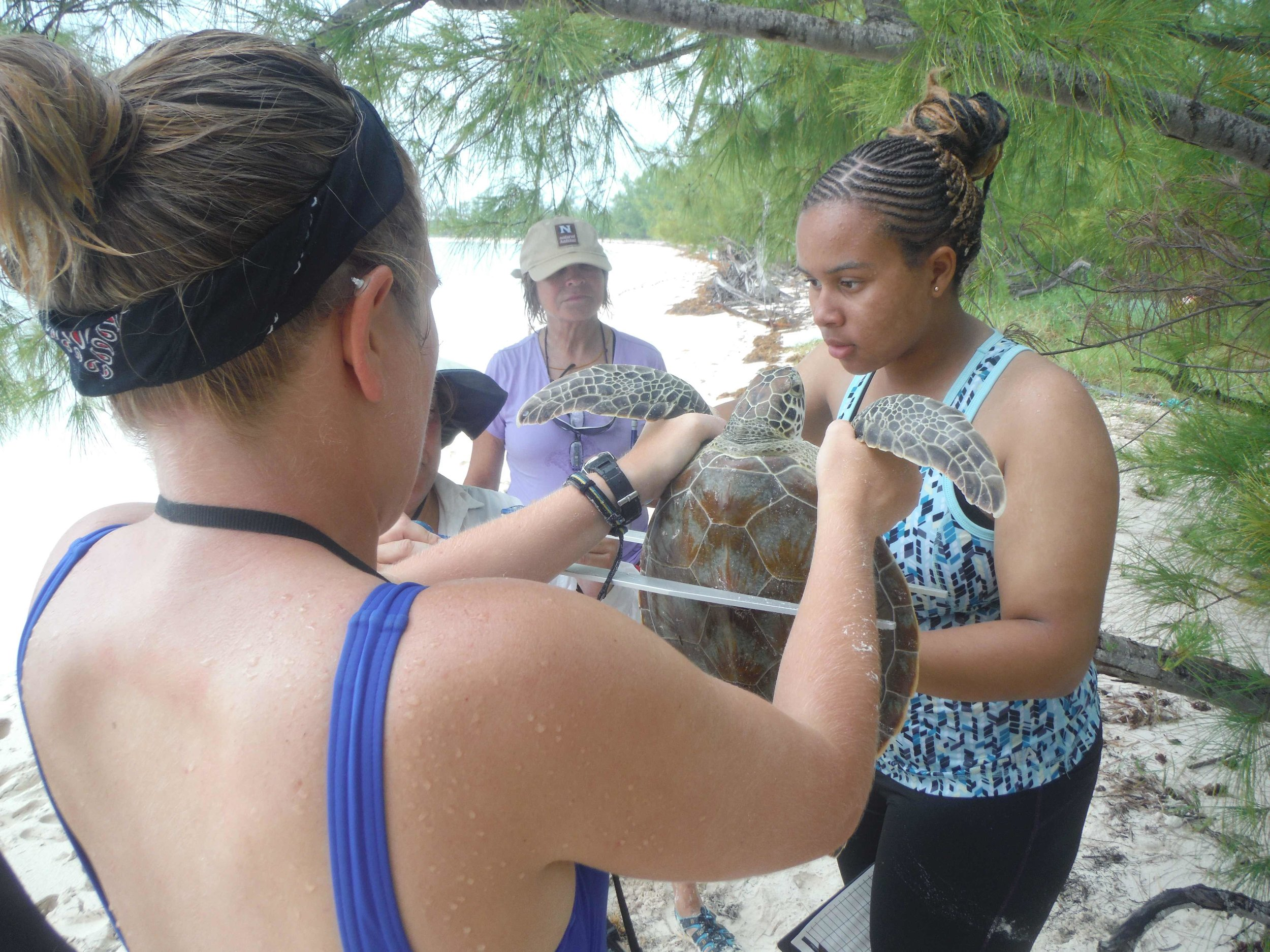 Cassidy Edwards sea turtle