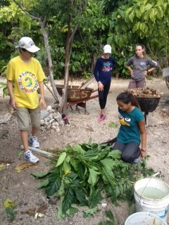Lyford Cay permaculture farm