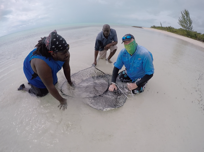 Dr. Owen O'Shea and Alexio Brown secure a large southern stingray