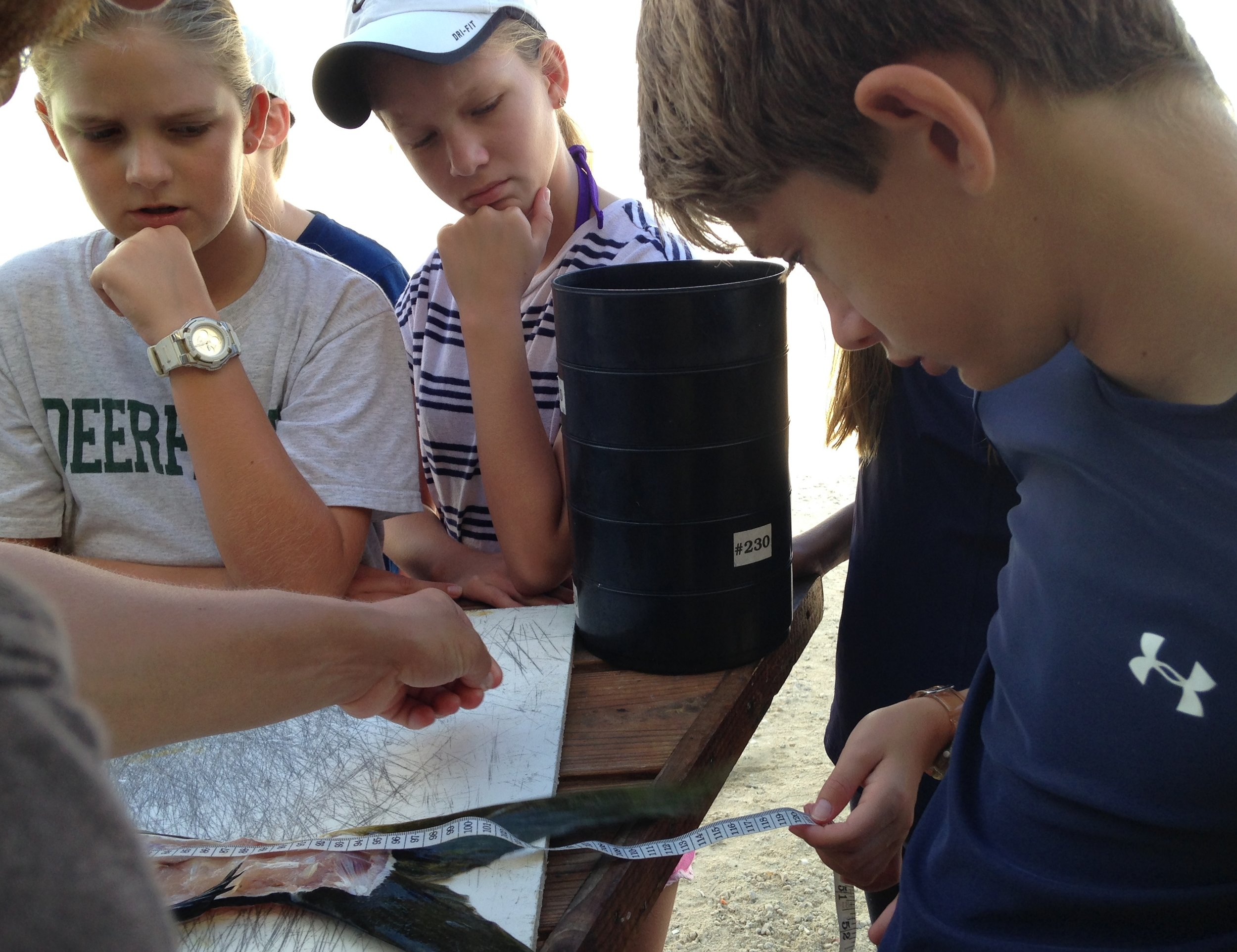 Students engaged in plastic pollution research getting up close with a mahi mahi dissection