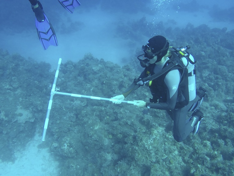 Students practicing using a t-bar during a reef transect