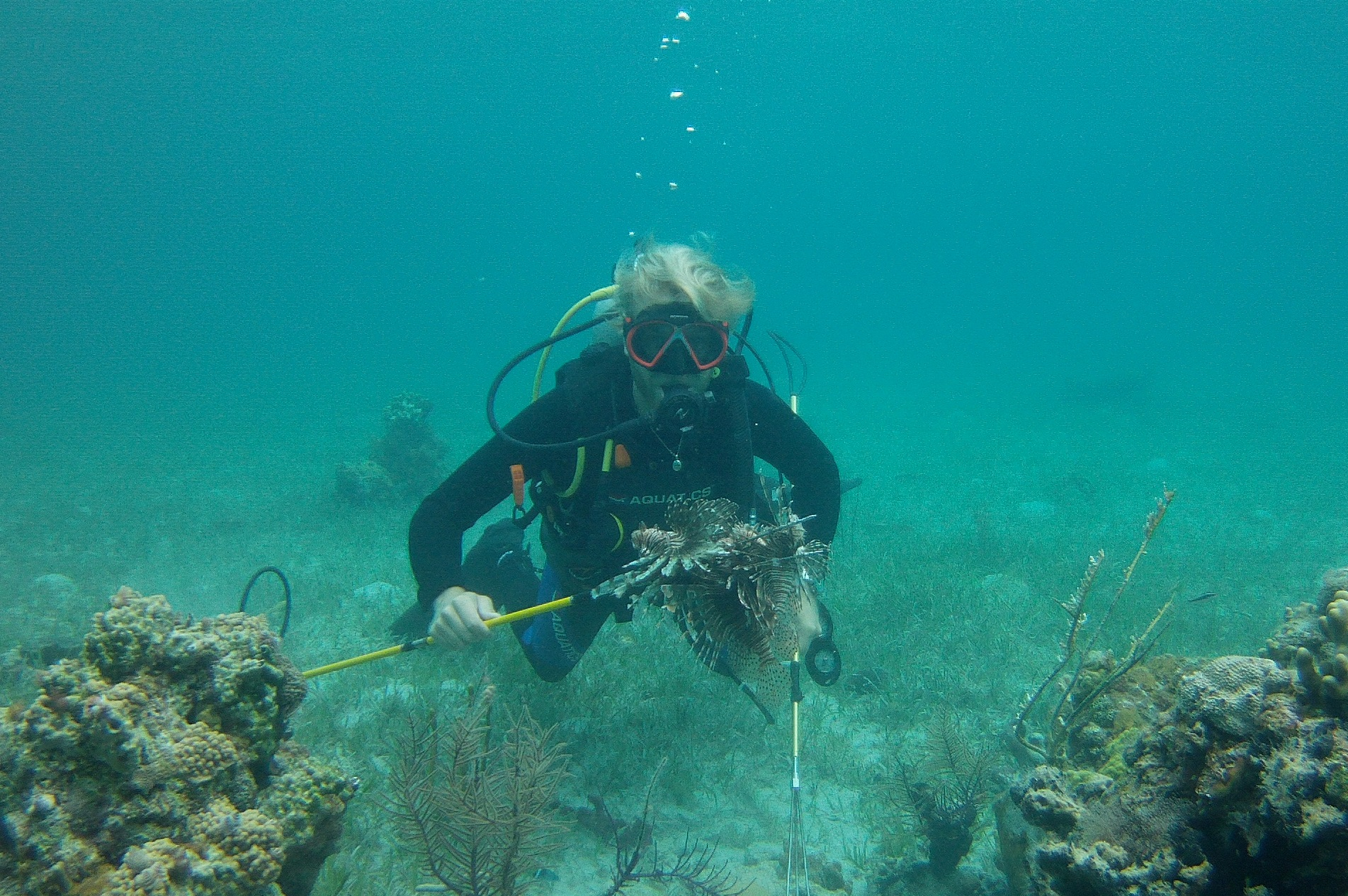 Adrian (SP 15 intern) does a great job removing a lionfish