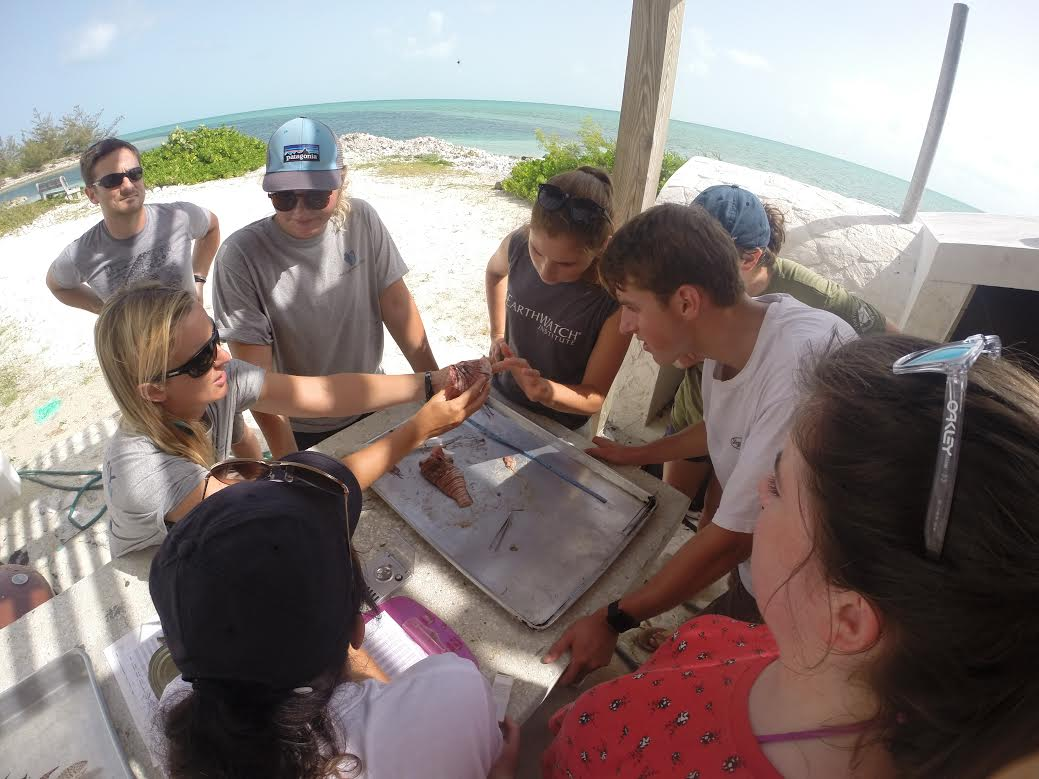 Dr. Jocelyn Curtis-Quick shows visiting Earthwatch group how to dissect and fillet a lionfish. (1)