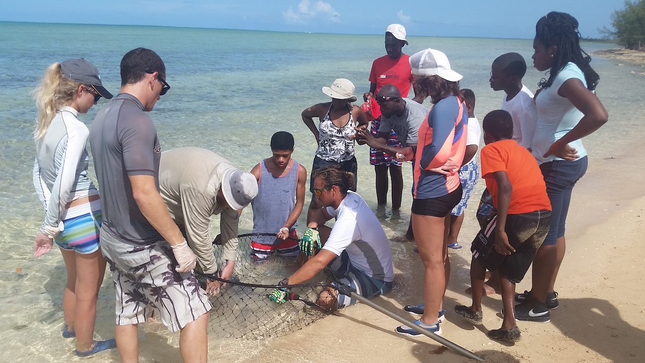 Students assist researchers  studying stingrays