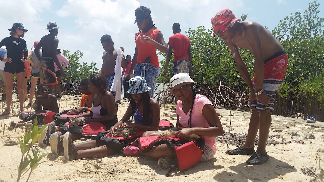 Students sit on the beach to hold turtles as the research team takes their measurements