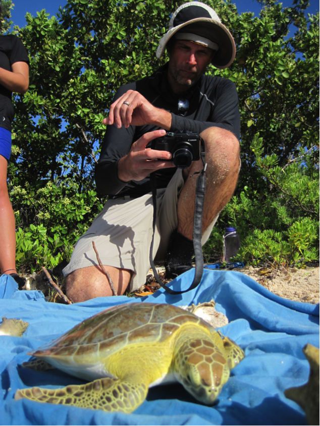 Prof. Irschick takes a series of digital images of an individual green turtle for input into the 3D modelling software