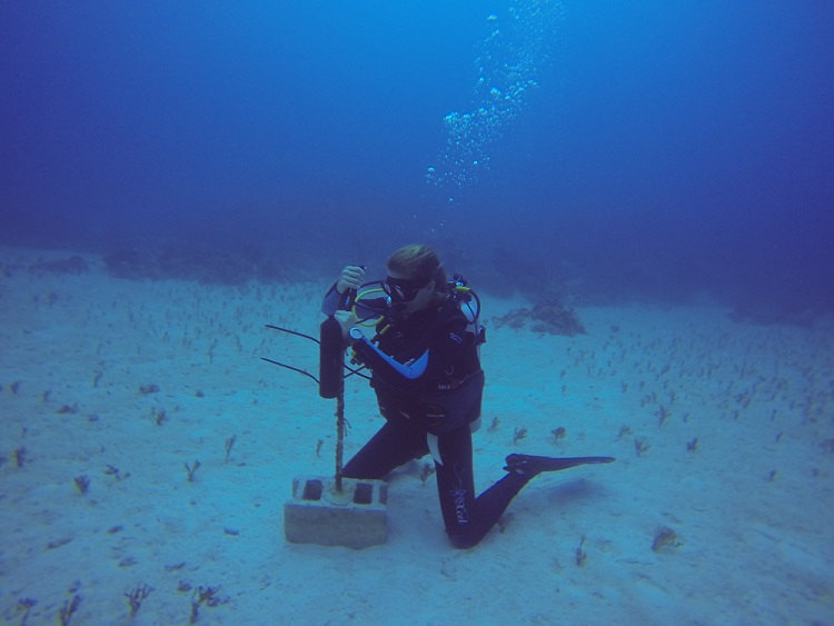 Georgie Burruss deploys a VEMCO receiver while on SCUBA.