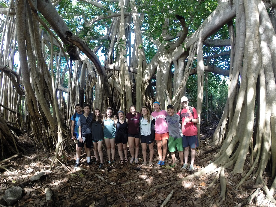 Exploring the Banyan tree in Rock Sound