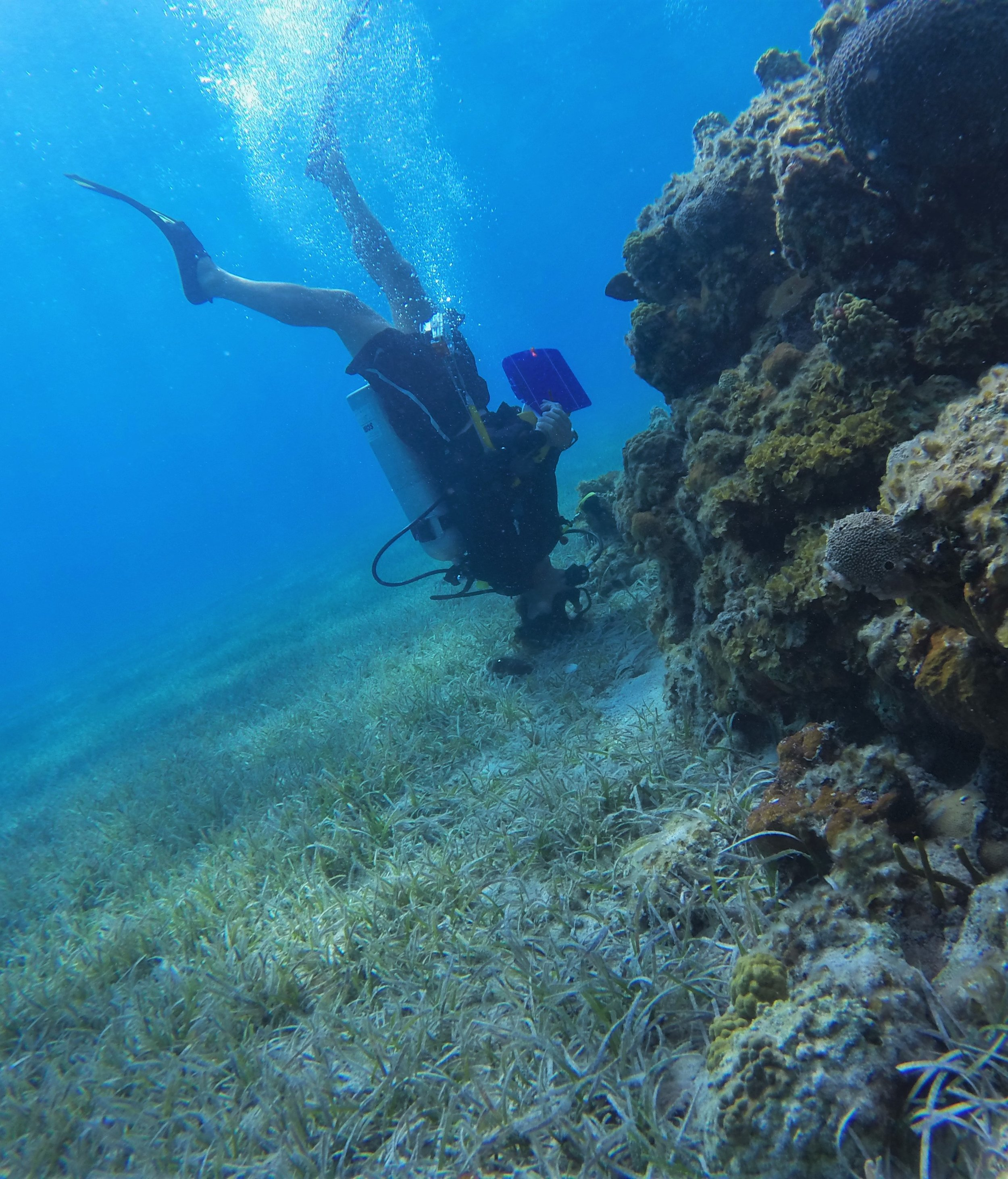 Every part of the reef is searched for lionfish