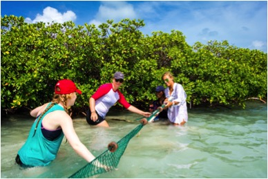 Sea Turtle research interns and volunteers helping pull the seine net