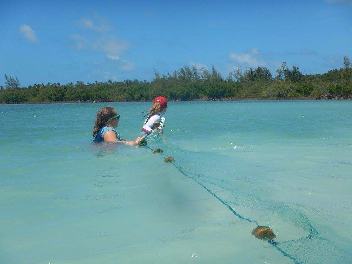 Two CEI interns catching turtles with a seine net (turtle seining)