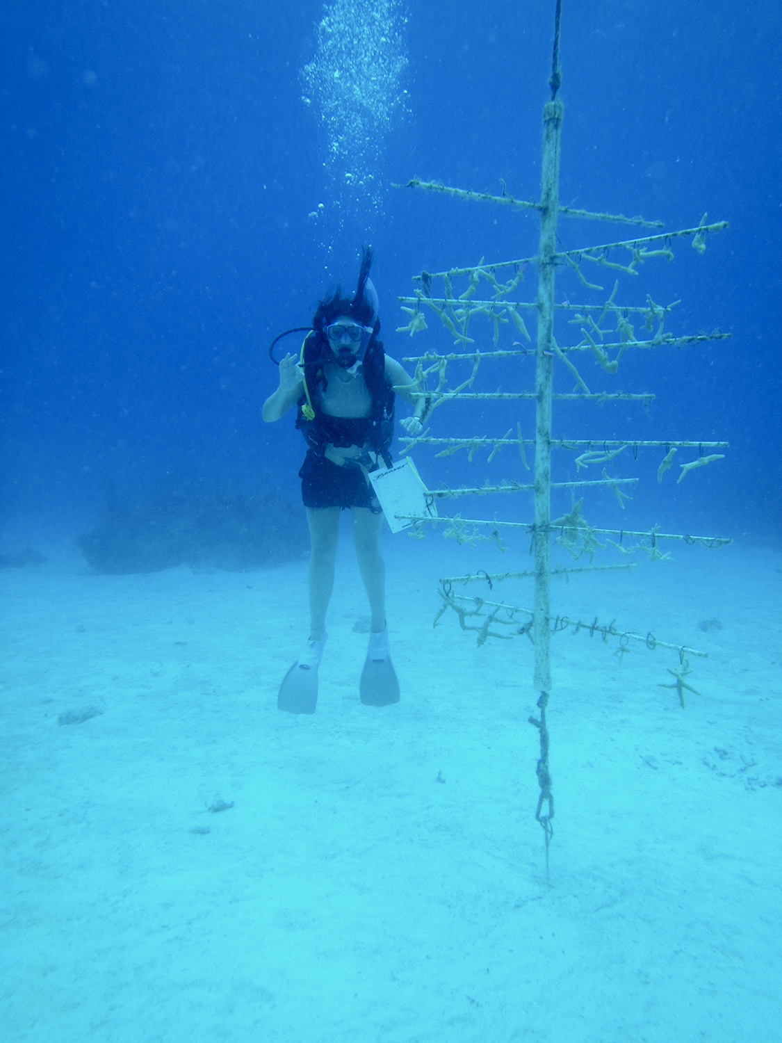 University of Leeds undergraduate student Natasha Webbe by the coral nursery at Tunnel Rock