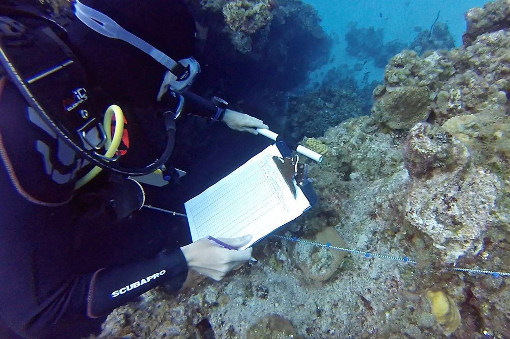 Drew Hitchner conducting measurements during a coral survey (photo by Hayley Jo Carr)