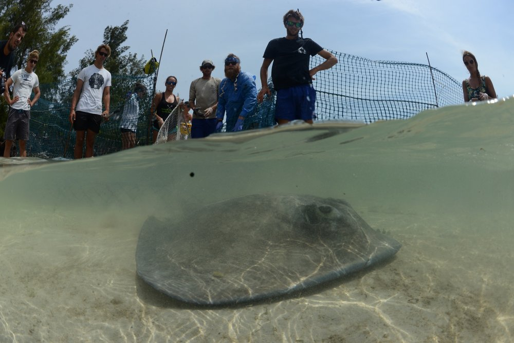Owen instructing Shark Lab volunteers and staff on safe handling practices on stingrays.