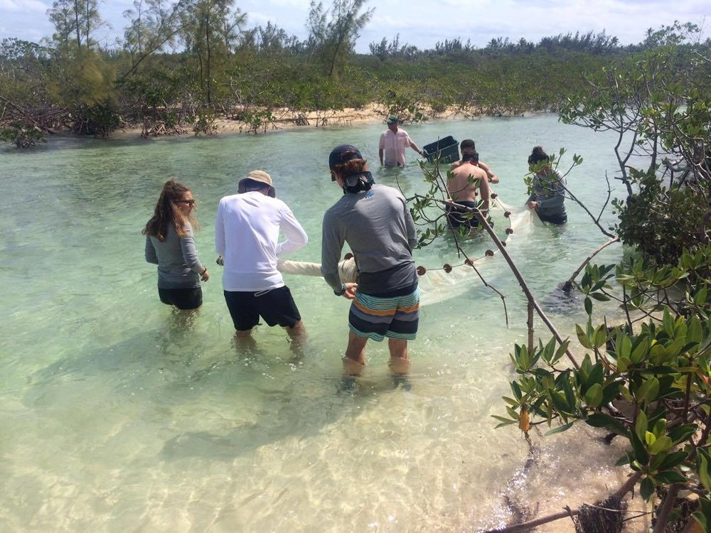 Island School students collect schoolmaster snappers from a local creek.