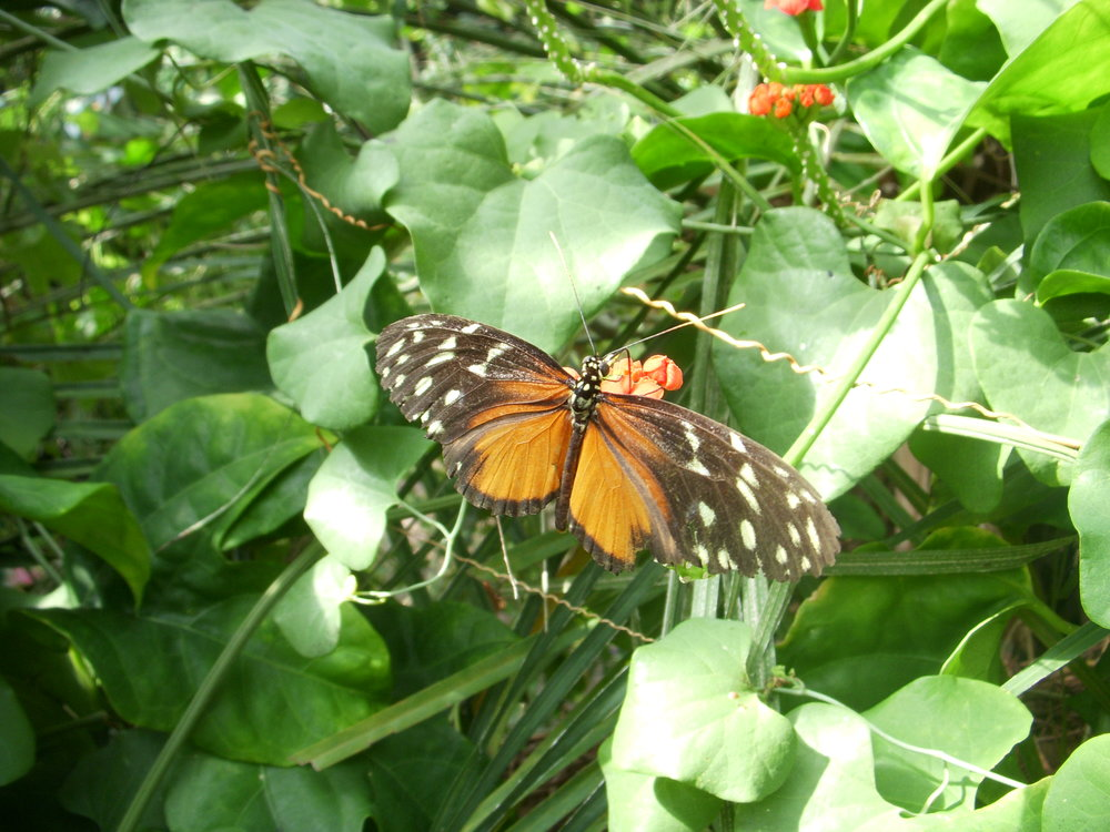 Another butterfly